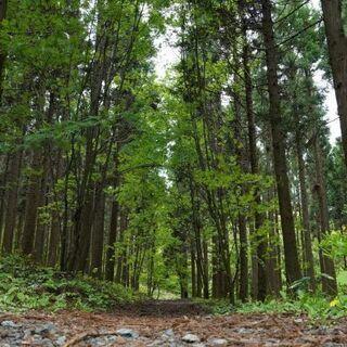 🌹 親から山林を相続したが手放したい😕 🌲買い受けます。