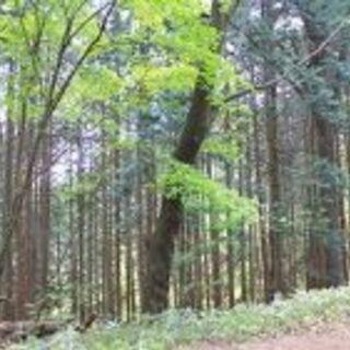 🌹 両親から山林を相続したが😕手放したい 🌲 買い受けます。 - その他