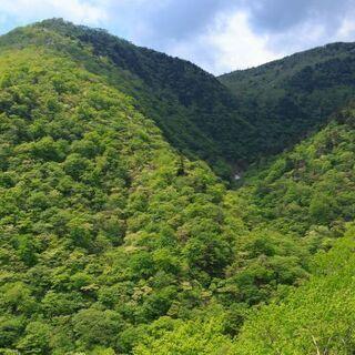🌹 両親から山林を相続したが😕手放したい 🌲 買い受けます。 - 桑名市
