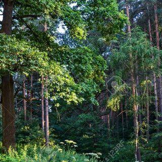 🌹 両親から山林を相続したが😕手放したい 🌲 買い受けます。 − 三重県