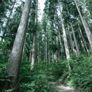 🌸 両親から山林を相続したが😕手放したい 🌲 買い受けます。