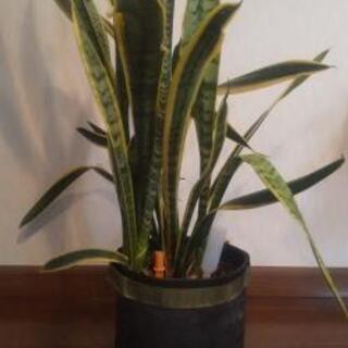 【新生活の方へ】無印良品 植木鉢 観葉植物