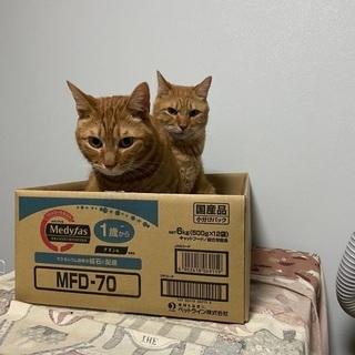 猫のおやつ ちゅーるのパッケージください!