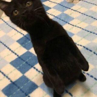 1月24日(日)大安吉日新春猫の譲渡会💓 黒ちゃん男の子生…