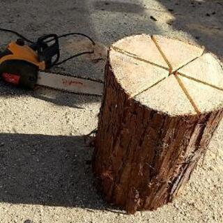ヒノキの丸太。木のろうそく。スエーデントーチにどうですか?