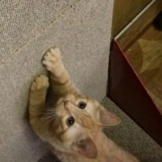 生後3ヶ月の子猫の里親募集中