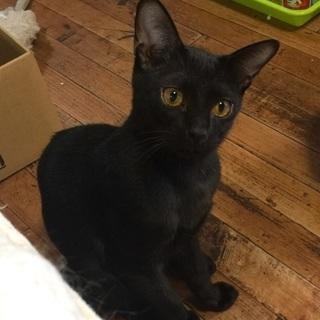 漆黒の黒猫さん♪おちょぼ口♪♪ - 猫