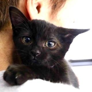 漆黒の黒猫さん♪おちょぼ口♪♪