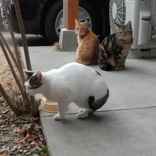 野良猫2匹 里親さん募集中です。