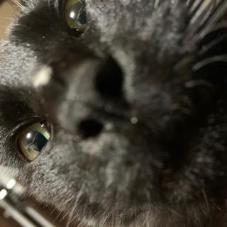 黒猫大人  人懐っこい子です。