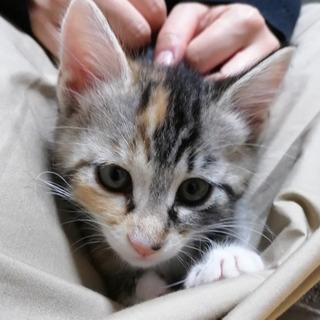 甘えん坊な4ヶ月の女の子 ミルフィーユちゃん