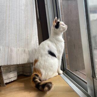トライアル中!★新品ミニキャットタワープレゼント★甘えん坊!★か...