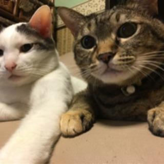 仲良し兄弟(♂♀)ソラとクゥ