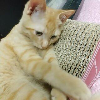 【譲渡決まりました★】生後3ヶ月の子猫の里親募集中