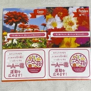 チューリップ追加です🌷あげます🌟花の種