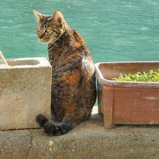 キジトラ猫の小太郎