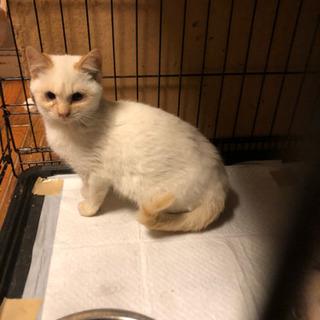 生後2か月くらいの可愛い子猫ちゃん