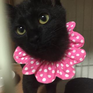4ヶ月黒猫姉妹