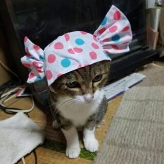 15歳のおす猫