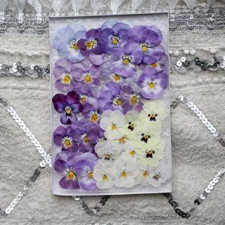 押し花 薄紫とクリーム色のビオラ