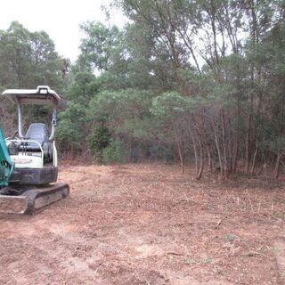 荒地、大木、カズラ、竹等でおおわれた荒地