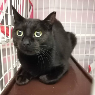 美猫の黒猫ママさん
