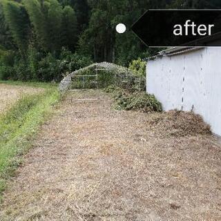 安心の低価格🌲お庭の草刈り、剪定、伐採🌲