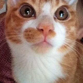 4ヶ月の子猫、里親募集します(^^)