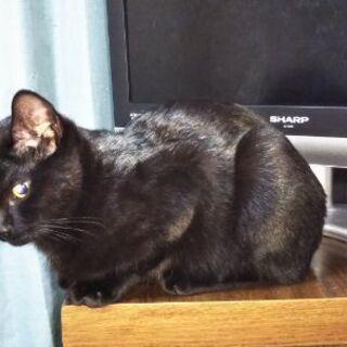 生後5ヶ月の黒猫