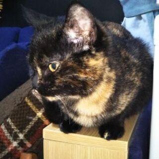 生後5ヶ月のサビ猫