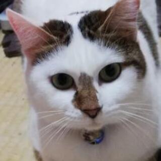 猫は大好き人馴れ修行中の女のコ