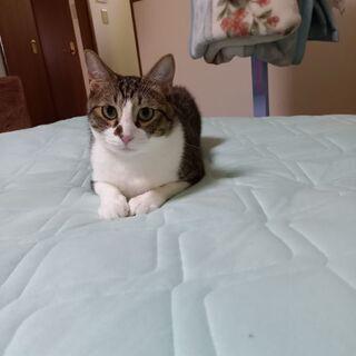 オス猫1歳です(去勢済み)