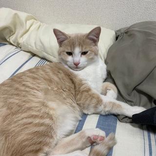 すごく人懐っこい猫ちゃんです。