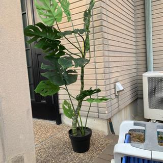 値下げしました。造花モンステラ。ニトリ製。緑色キレイ − 滋賀県