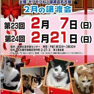 2/21(日) 猫の譲渡会 in 名古屋市瑞穂生涯学習センター