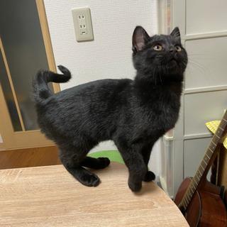 生後3ヵ月黒猫の男の子