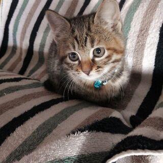 オチャメでやんちゃな子猫です。