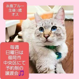 【お話中】毎週日曜日は福岡市中央区にて予約制の譲渡会🎵糸島ブルー