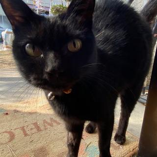 【慢性鼻炎持ち 避妊済♀】雑種の黒猫ちゃん