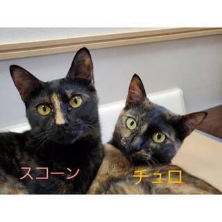 仲良し姉妹チュロ&スコーン(鼻筋1本)