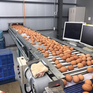 新鮮赤卵 30個