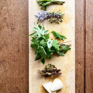 山菜収穫を体験!山菜の横綱や王様に会ってみませんか? 山菜…
