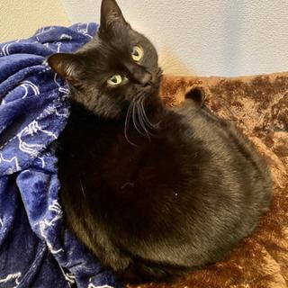 黒猫のタンゴちゃん♀