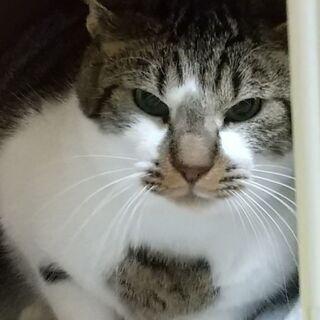 同郷の仲良し猫と二匹で迎えられました!きじ白金太郎