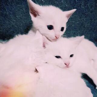 猫 写真追加しました!