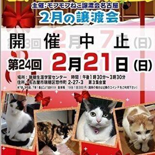 **開催中止** 2/7(日) 猫の譲渡会 in 名古屋市瑞穂生...