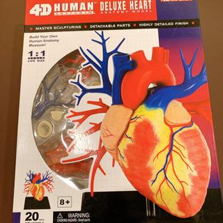 【未開封】心臓の模型①