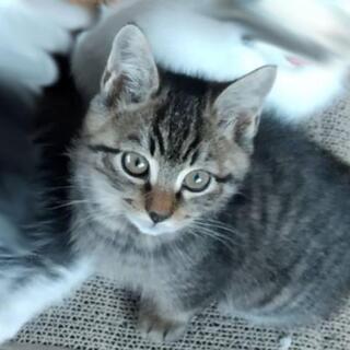 4ヶ月のオス子猫です♪