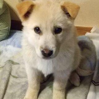 【仔犬の里親募集】MIX 3ヶ月の女の子