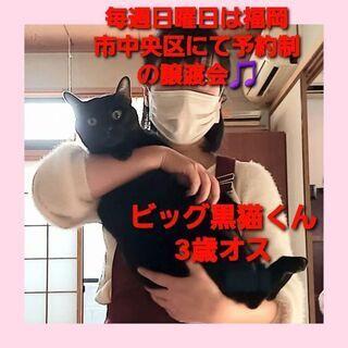 毎週日曜日は福岡市中央区にて予約制の譲渡会🎵ビッグ黒猫